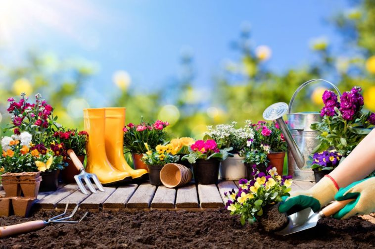 10 Gardening Tips For Newbies. Using our easy to follow Gardening Tips, Complete Beginners