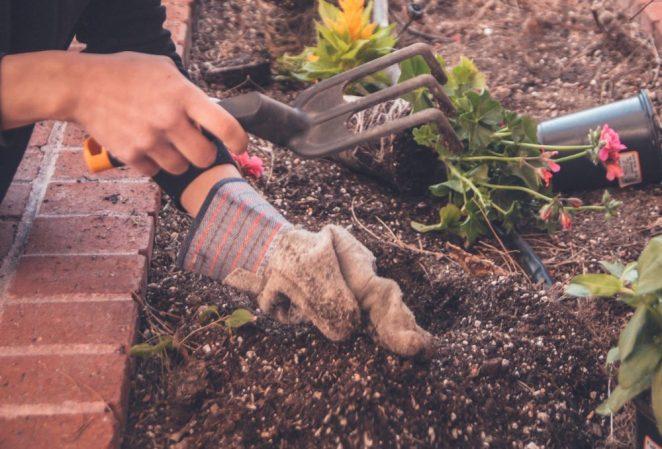 tilling the garden soil for starters