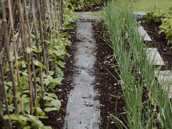 planting onion crop with seeds and saplings in your garden