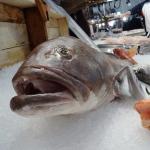Peixes estão cada vez menores por conta do aquecimento global, apontam estudos