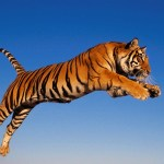 6 importantes causas animais para defender no século 21