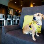 O hotel que abriga cães abandonados para hóspedes adotá-los