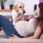 Conviver com animais na gravidez faz bem aos bebês