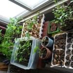 Sem quintal? Saiba o que plantar dentro de casa!