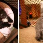 Funcionários públicos ganham companhia de animais de abrigo durante expediente