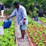Moradores em situação de rua cultivam horta comunitária em abrigo de SP