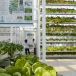 Fazenda vertical soluciona problema da baixa produção de legumes em Cingapura