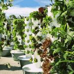 4 fazendas urbanas incríveis que produzem orgânicos mundo afora