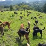 O abrigo voluntário da Costa Rica que cuida de mil cachorros abandonados