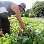 Cidade do RS mantém horta que garante orgânicos na merenda de todos os alunos da rede pública