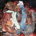 Após encalhar com 30 sacos plásticos no estômago, baleia precisa ser sacrificada