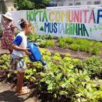 Projeto implementa hortas nos morros de PE (que oferecem orgânicos e ervas medicinais DE GRAÇA à população)