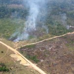 Desmatamento na Amazônia foi sete vezes maior do que a área do RJ em 2016