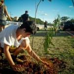 Cidadãos de SP têm direito a mudas de árvores gratuitas. Saiba onde retirar as suas!