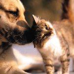 Chega de comercializar vidas! Califórnia proíbe venda de animais nascidos em criadouros