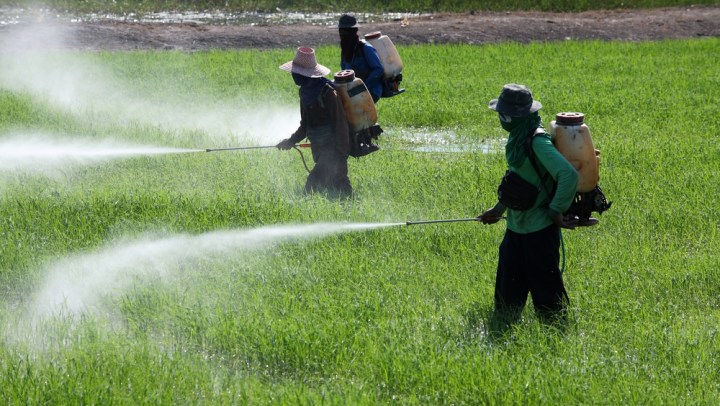 Anvisa libera uso de agrotóxico no Brasil que pode causar danos graves ao sistema nervoso dos consumidores