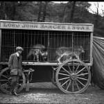 Depois de implementar penas mais severas para crueldade animal, Inglaterra quer fim de bichos em circos