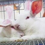 Minas Gerais volta atrás na proibição e autoriza uso de animais em testes para cosméticos