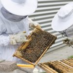 Nos EUA, terrenos abandonados são transformados em fazendas urbanas de abelhas que recuperam biodiversidade local
