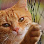 Vacine seu bichinho contra ela! Praga felina que já matou milhares de gatos ressurge no mundo