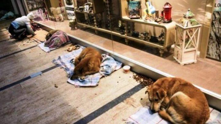 O shopping que abriga animais de rua durante a noite para protegê-los do frio