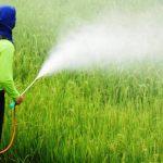 Oito brasileiros são contaminados por dia por agrotóxicos. Confira mais 7 dados assustadores sobre o assunto!