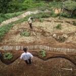 "Curso de Agrofloresta ensina a implantar ""jardins comestíveis"""