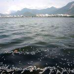 55 toneladas de peixes mortos foram recolhidas no Rio de Janeiro