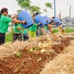 Florianópolis ganha prêmio internacional por iniciativa de compostagem comunitária