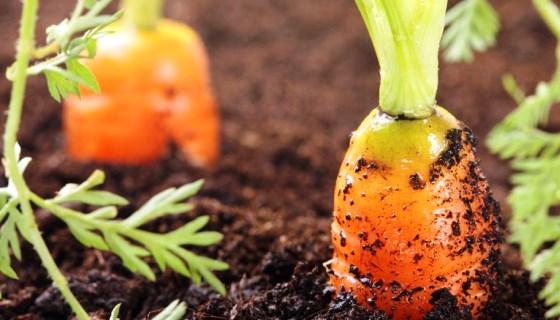 Florianópolis sanciona lei que proíbe venda e uso de agrotóxicos na cidade
