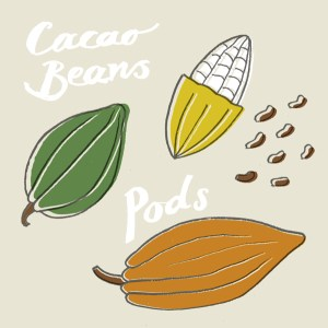 cacao beans and pods