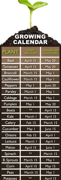 How & When To Plant Your Own Veggie Garden