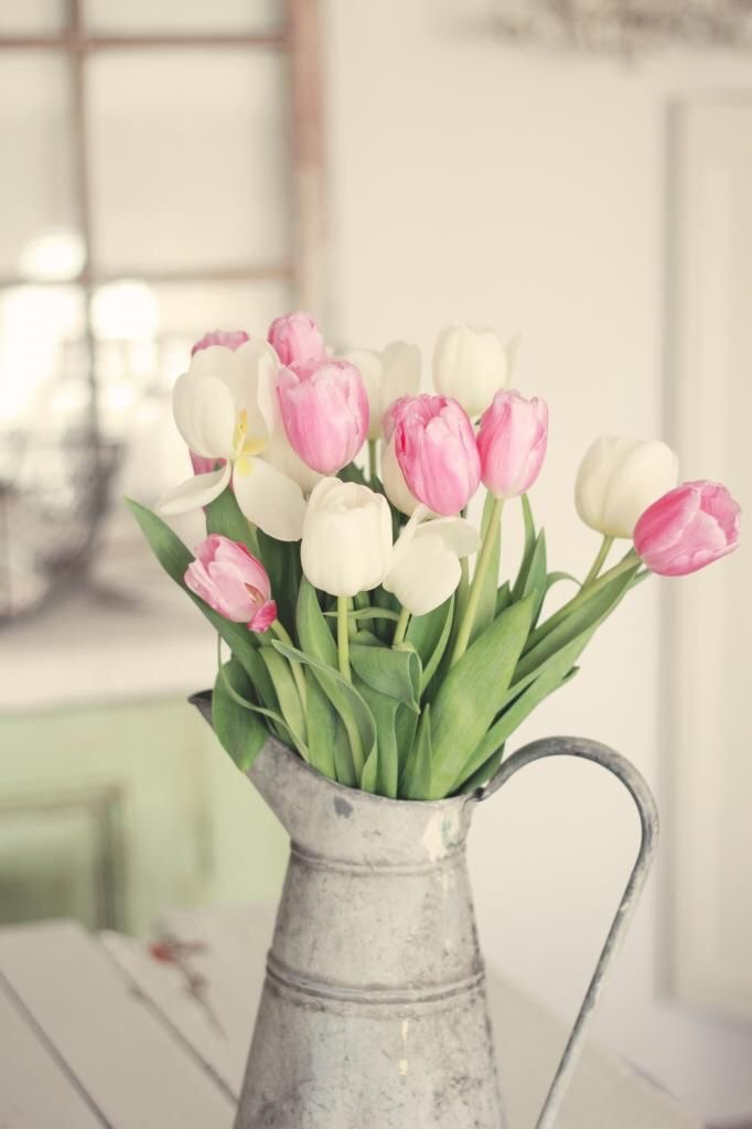 Tulips Have Sprung! Tips On How To Make Them Last 2
