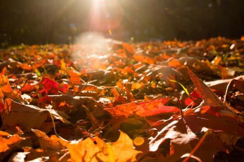 Mulching Wet Leaves