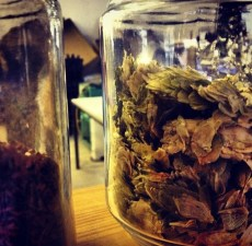 Hops in a glass (Photo attributed to Jordan Harris)