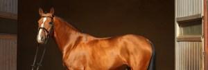 Become a member - equine recruitment specialists