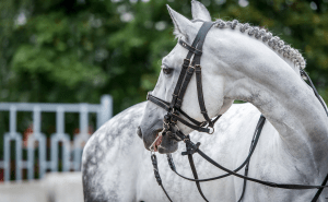Equine Careers, Equine Jobs, Grooms, Equine Recruitment