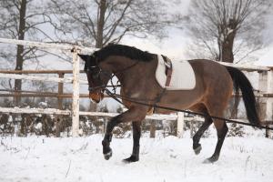 The Grooms List - Rugging Horses - Caroline Carter Recruitment Ltd