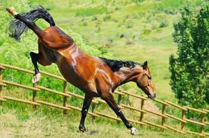 Horse Characters - Raging Bull