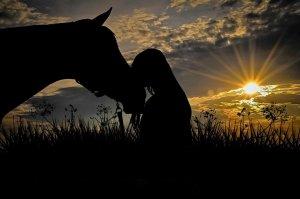 Horse Characters - Teachers Pet