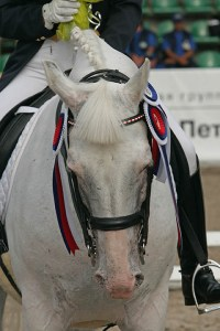 Competition Grooms - the highs