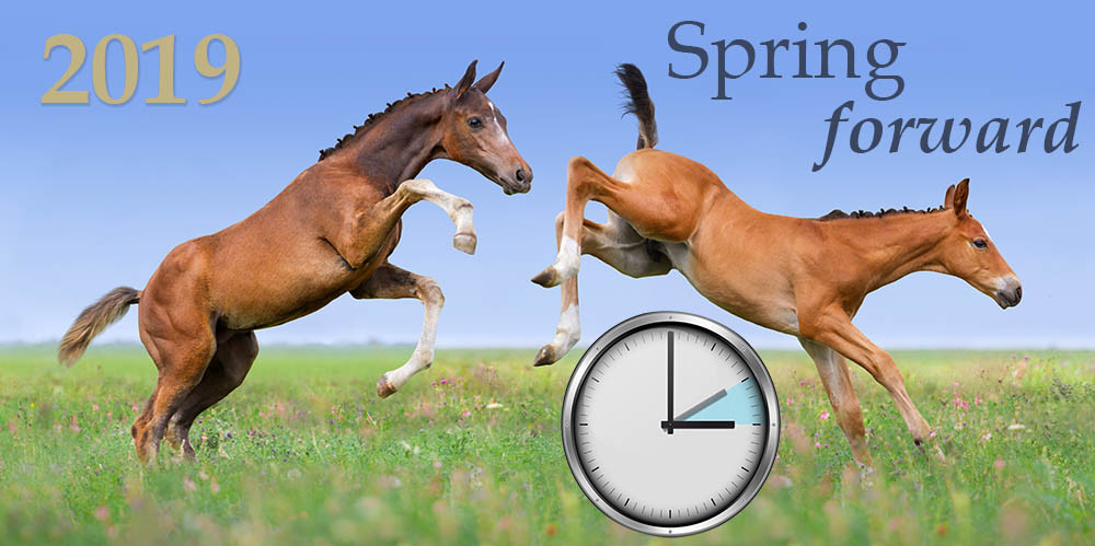 Spring Forward in the Equine Industry 2019
