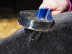 Spring Forward in the Equine Industry - Moulting Horses