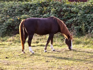 Spring Forward in the Equine Industry - Laminitis