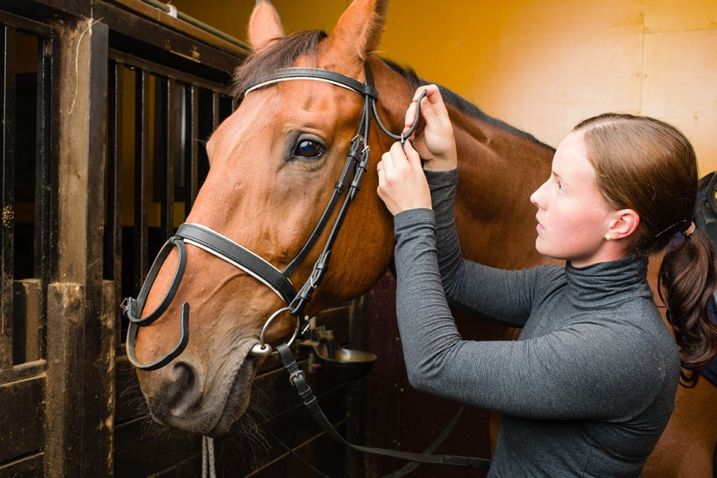 Become a professional groom in 6 Simple Steps