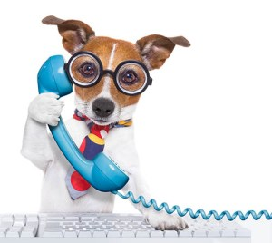 Contact us for help with writing an equine CV