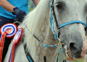 The ultimate guide to the Royal Windsor Horse Show - Horse Endurance
