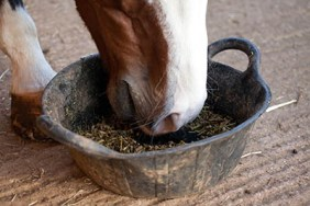 Are you ready to be a Sole Charge Groom - feeding regimes