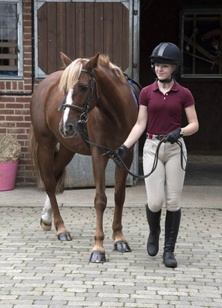 Equine Apprenticeships - Course Options - Am I Eligible