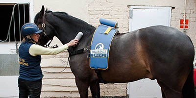 What are Dressage Grooms and Dressage Groom Jobs - specialist equipment